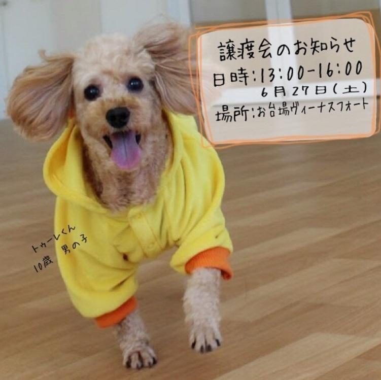 お台場ヴィーナスフォート犬の譲渡会イメージ